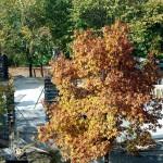 zona defrișată din Parcul Tineretului